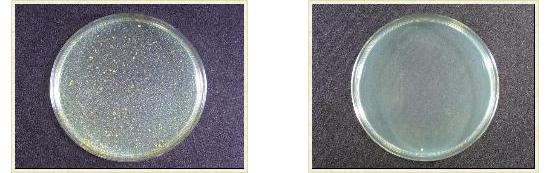 抗菌コート対比